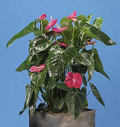 Красиво цветущие растения галерея 1